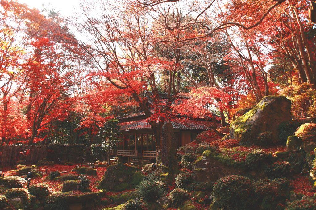 滋賀の紅葉めぐり