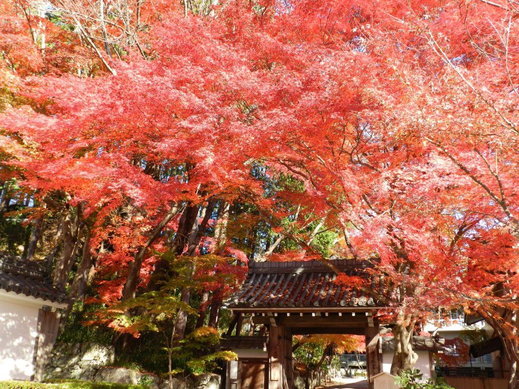 日本遺産・琵琶湖 祈りと暮らしの水遺産 西教寺